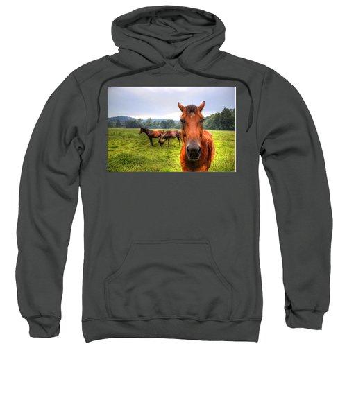 A Starring Horse 2 Sweatshirt by Jonny D
