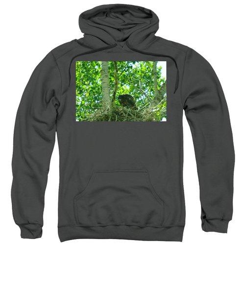 Adolescent Eagle Eating A Fish Sweatshirt