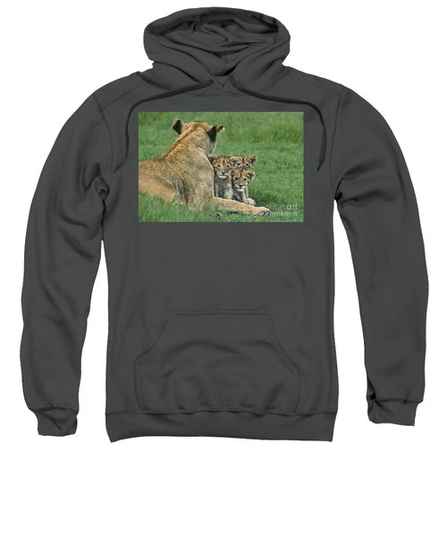 African Lion Cubs Study The Photographer Tanzania Sweatshirt