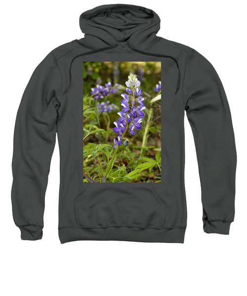 Alaskan Lupine In Denali Park Sweatshirt