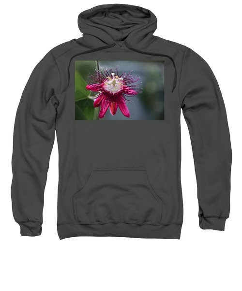 Amazing Passion Flower Sweatshirt