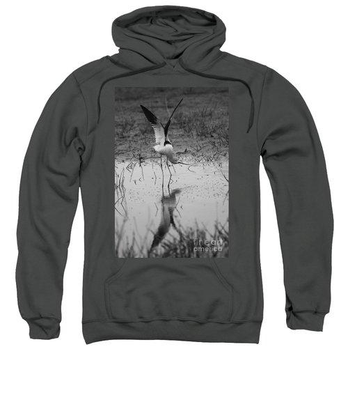 American Avocet Reflection Sweatshirt
