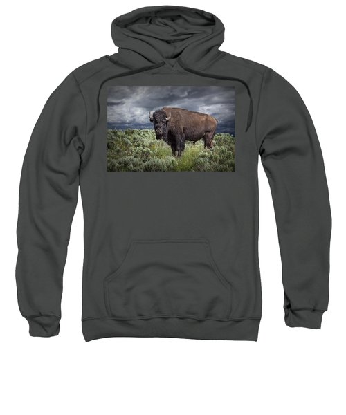 American Buffalo Or Bison In Yellowstone Sweatshirt