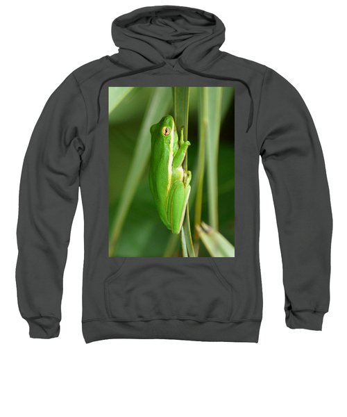 Sweatshirt featuring the photograph American Green Tree Frog by Kim Pate