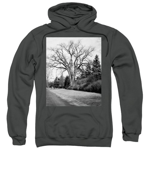 An Elm Tree At The Side Of A Road Sweatshirt
