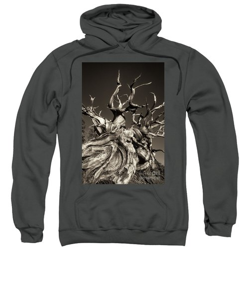 Ancient Bristlecone Pine In Black And White Sweatshirt