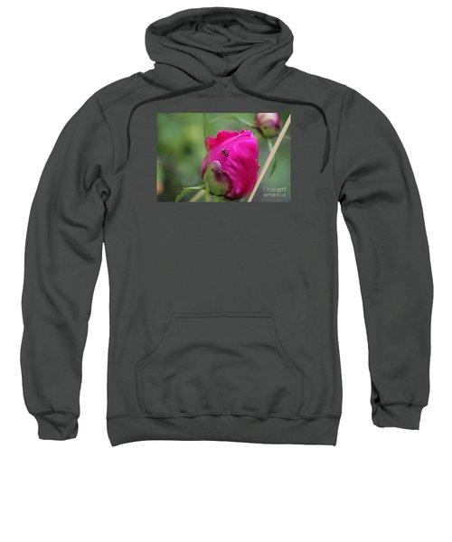 Ant On Peony Sweatshirt