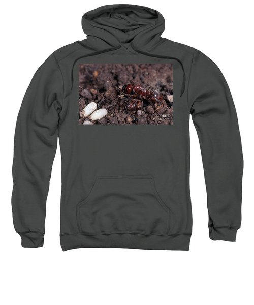 Ant Queen Fight Sweatshirt by Gregory G. Dimijian, M.D.