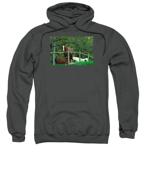 Apple Dreams Sweatshirt