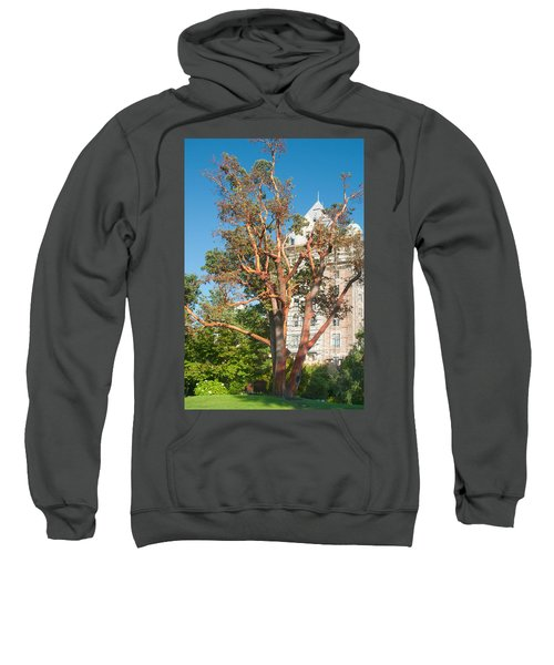 Arbutus Tree Sweatshirt