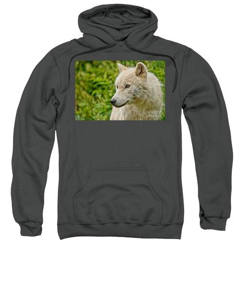 Arctic Wolf Pictures 241 Sweatshirt