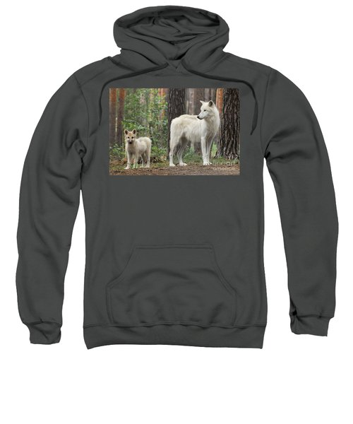 Arctic Wolf With Pup, Canis Lupus Albus Sweatshirt