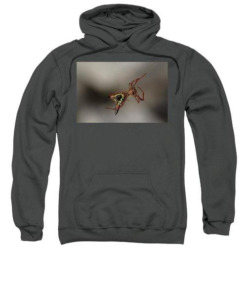 Arrow-shaped Micrathena Spider Starting A Web Sweatshirt