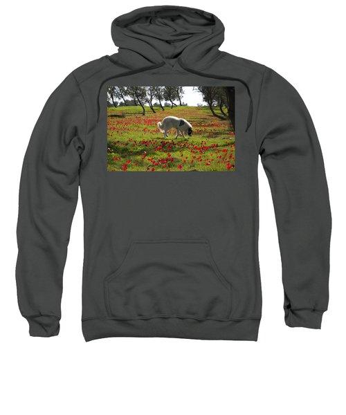 At Ruchama Forest Israel 1 Sweatshirt