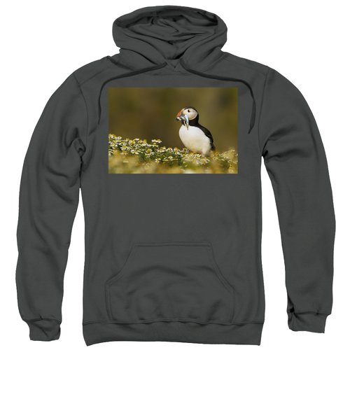 Atlantic Puffin Carrying Fish Skomer Sweatshirt by Sebastian Kennerknecht