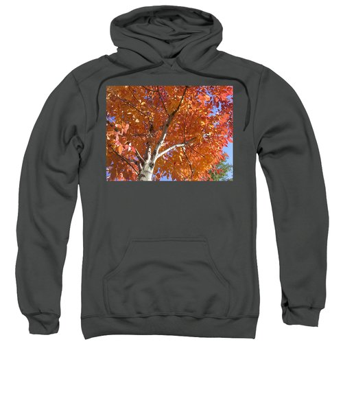 Autumn Aspen Sweatshirt