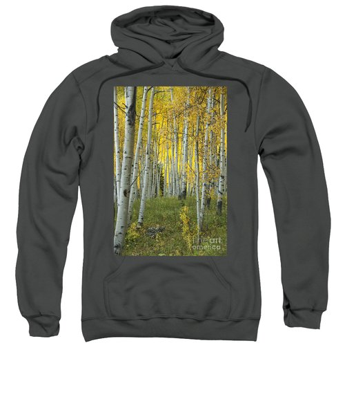 Autumn In The Aspen Grove Sweatshirt