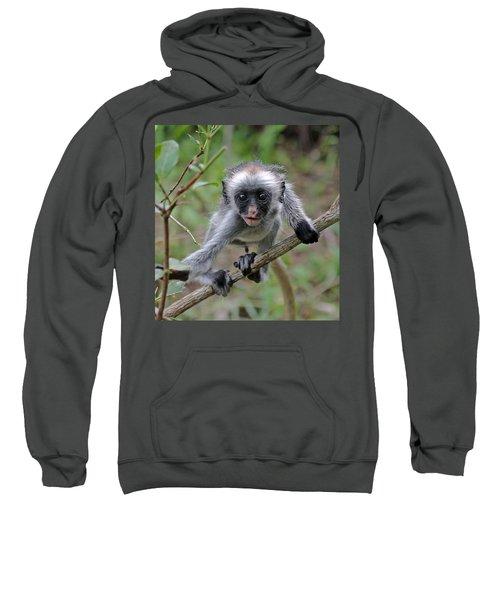 Baby Red Colobus Monkey Sweatshirt