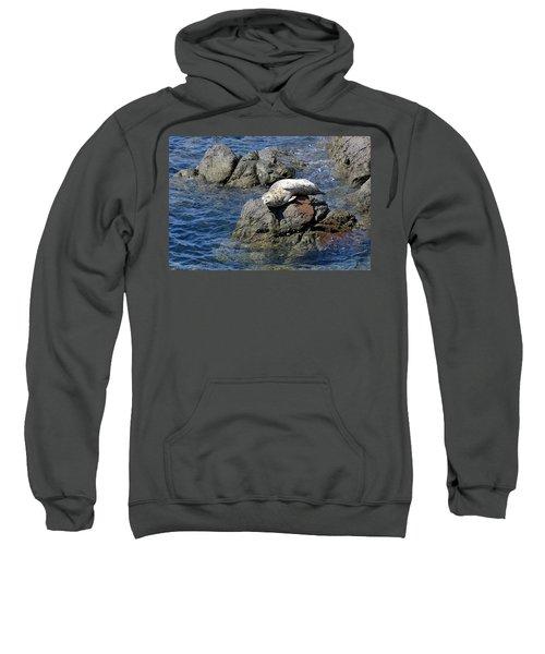 Baby Sea Lion On Rock At San Juan Island Sweatshirt
