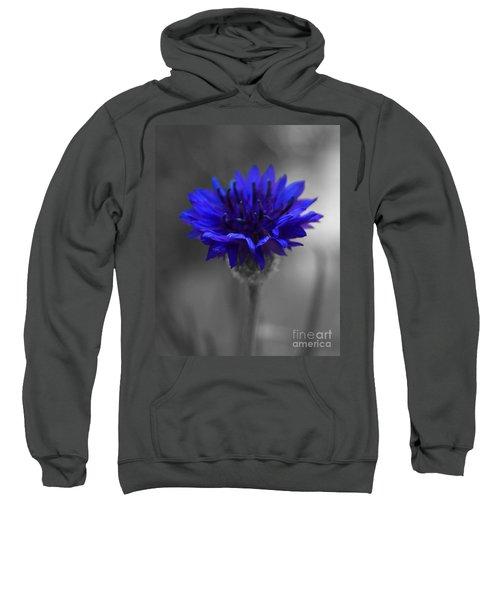 Bachelor's Button Sweatshirt