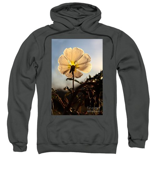 Backlit Evening Primrose Sweatshirt