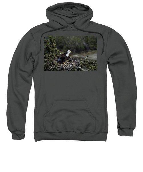 Bald Eagles Nesting Sweatshirt