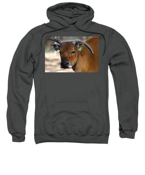 Banteng Girl Sweatshirt