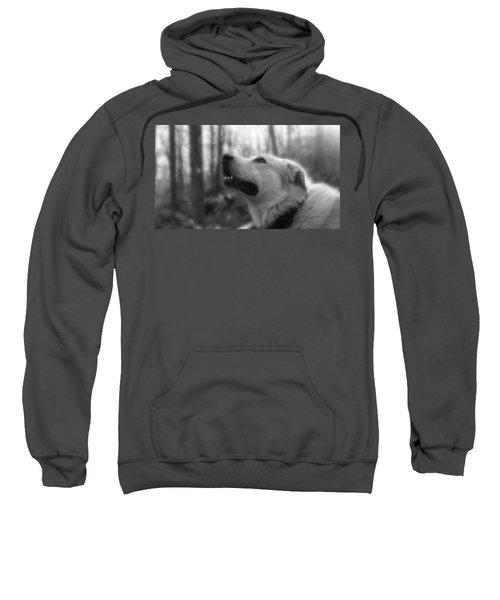 Bear Tooth Not Camera Shy Sweatshirt