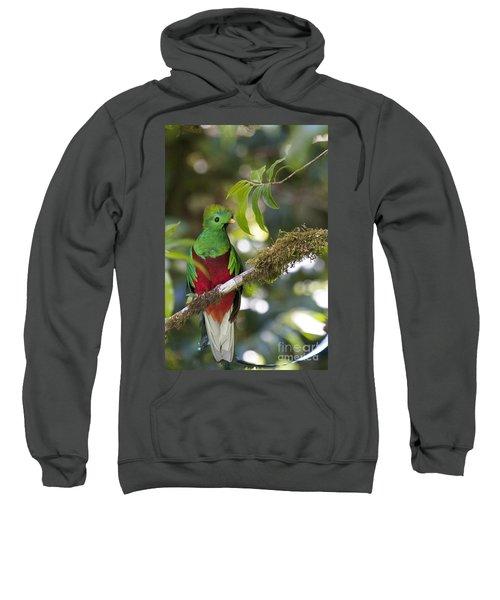 Beautiful Quetzal 1 Sweatshirt