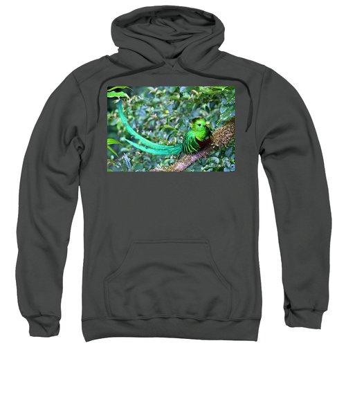 Beautiful Quetzal 3 Sweatshirt