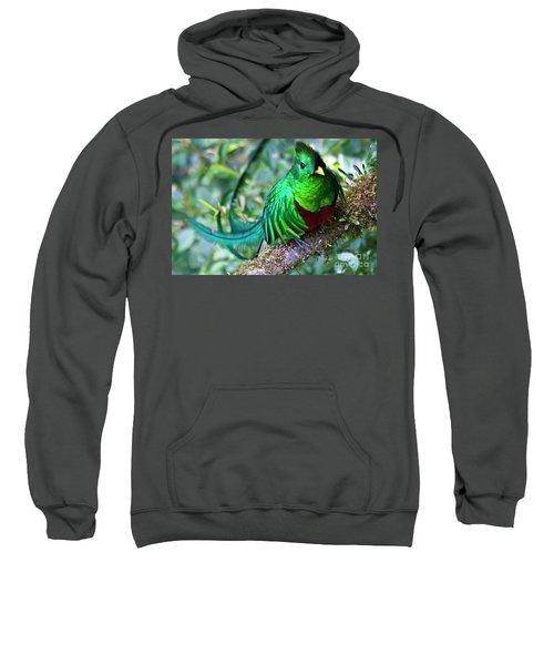 Beautiful Quetzal 4 Sweatshirt