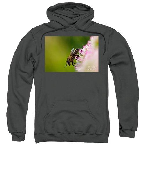 Bee Sitting On A Flower Sweatshirt