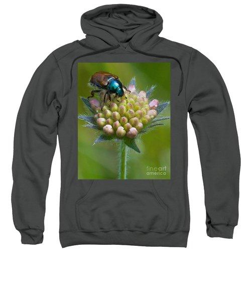 Beetle Sitting On Flower Sweatshirt