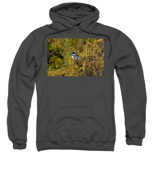 Belted Kingfisher Female Sweatshirt by Anthony Mercieca