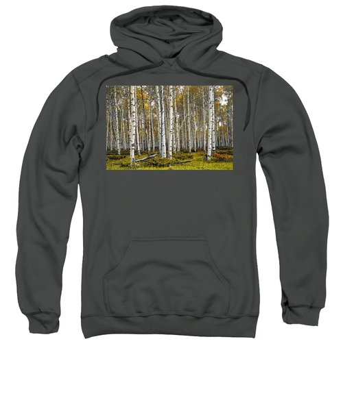 Aspen Trees In Autumn Sweatshirt