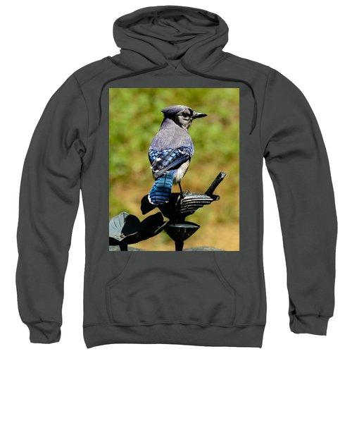 Bird On A Bird Sweatshirt