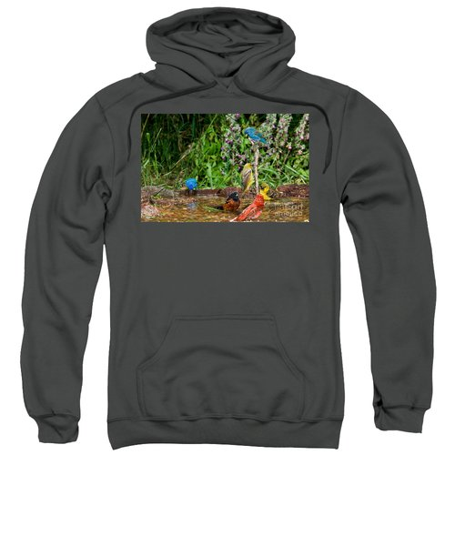 Birds Bathing Sweatshirt