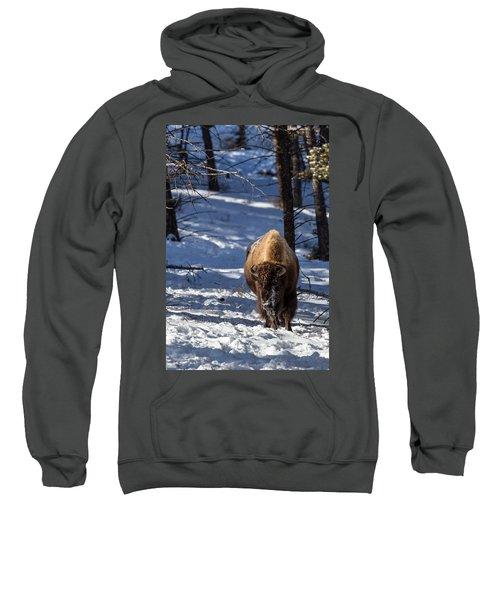 Bison In Winter Sweatshirt