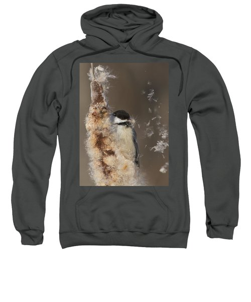 Black-capped Chickadee In Winter Sweatshirt