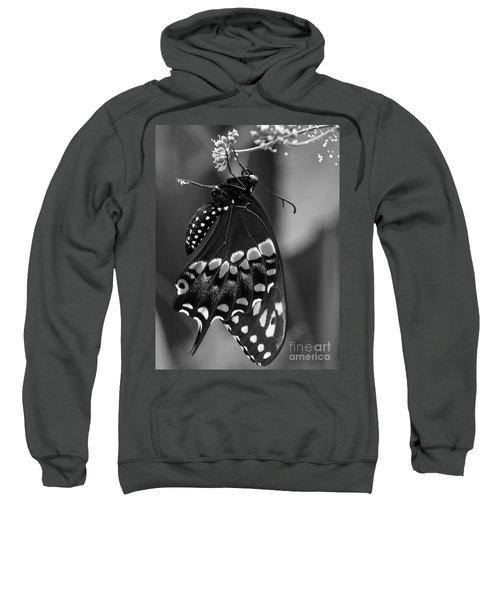 Black Swollowtail  Sweatshirt