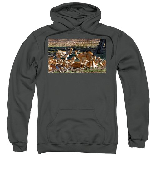Blackbuck Female And Fawns Sweatshirt by Miroslava Jurcik