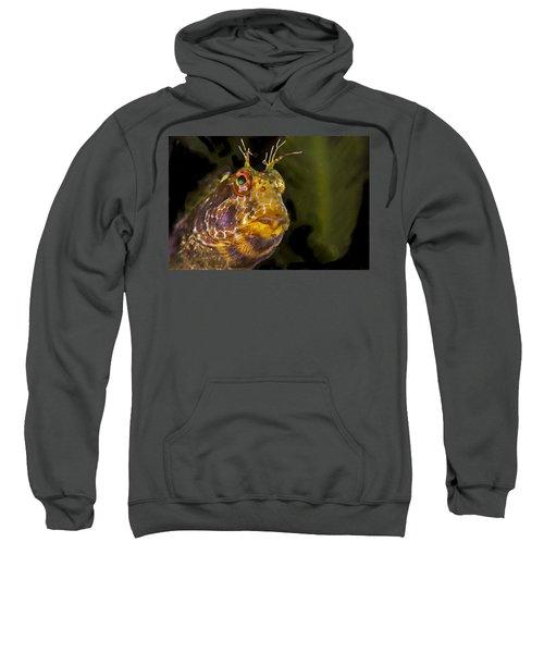 Blenny In Deep Thought Sweatshirt