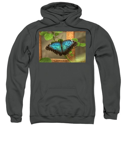 Blue And Black Butterfly Sweatshirt
