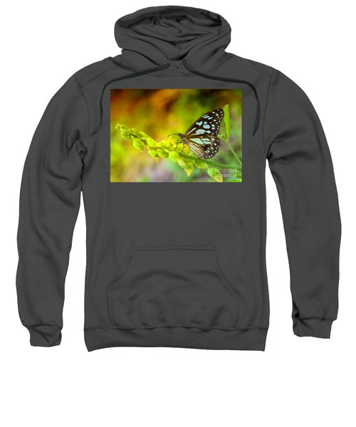 Blue Butterfly With Beautiful Colors Sweatshirt