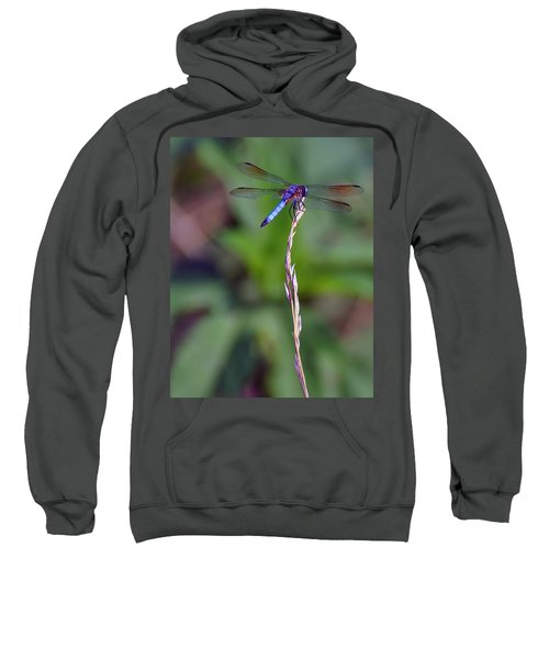 Blue Dragonfly On A Blade Of Grass  Sweatshirt