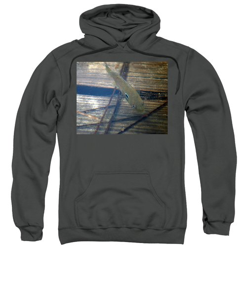 Sweatshirt featuring the photograph Bluegill On The Hunt by Kim Pate