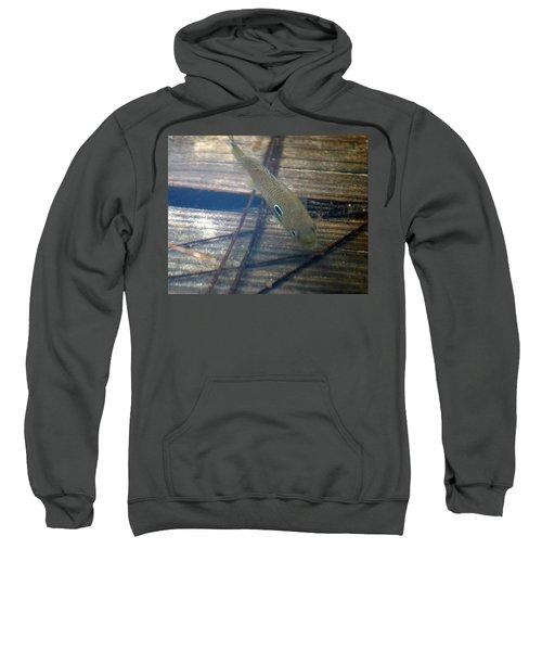 Bluegill On The Hunt Sweatshirt
