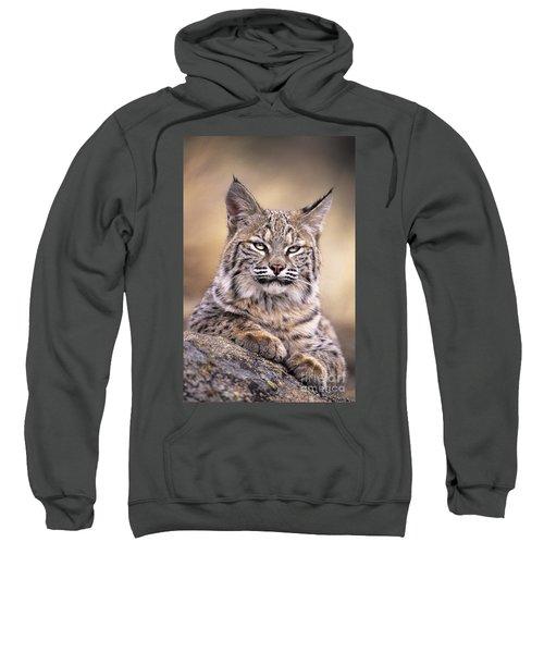 Bobcat Cub Portrait Montana Wildlife Sweatshirt