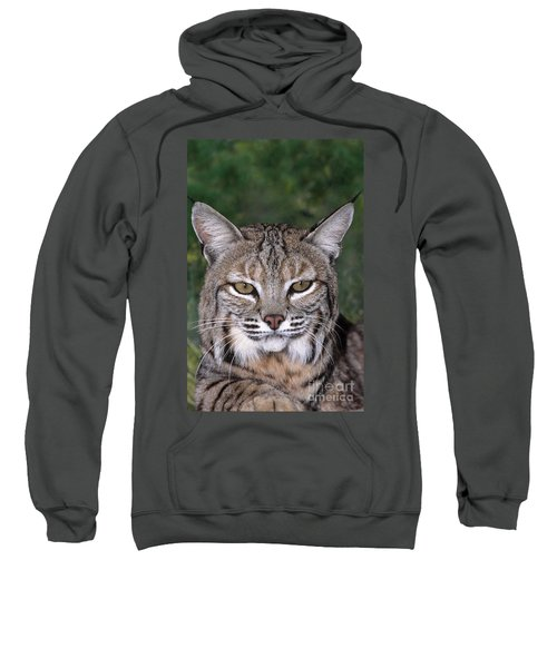 Bobcat Portrait Wildlife Rescue Sweatshirt