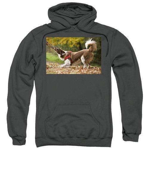 Border Collie Playing Sweatshirt